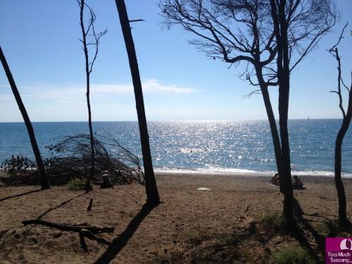 Pineta e spiaggia di Bibbona