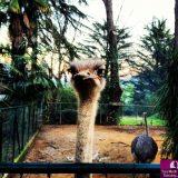 Un giorno allo Zoo di Pistoia
