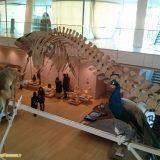 5 musei imperdibili da visitare con i bambini