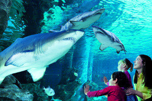 La meraviglia degli Acquari d'Italia: ecco la Top Ten!