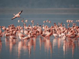 Lidi ferraresi e il Delta del Po: fra fenicotteri rosa, anguille e cappellacci