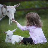Le fattorie didattiche: una giornata nella natura, a misura di famiglia