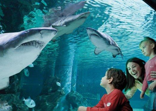 Aquarium Le Navi
