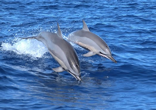 Luogo dei Cetacei