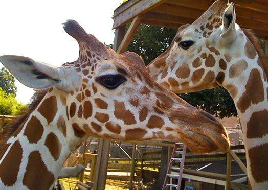 Zoopark in Bibione